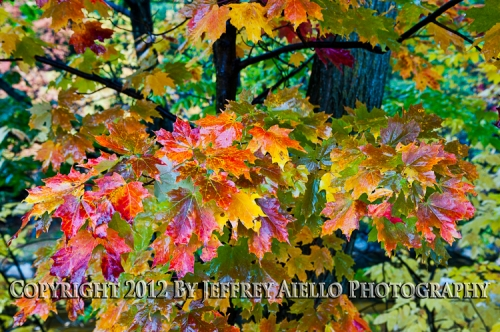 Multi-Colored Fall Foliage