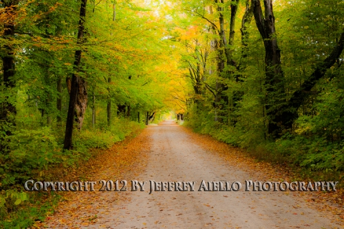 Road through the Fall